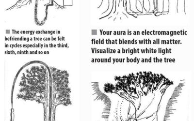 Zdravilne sposobnosti dreves