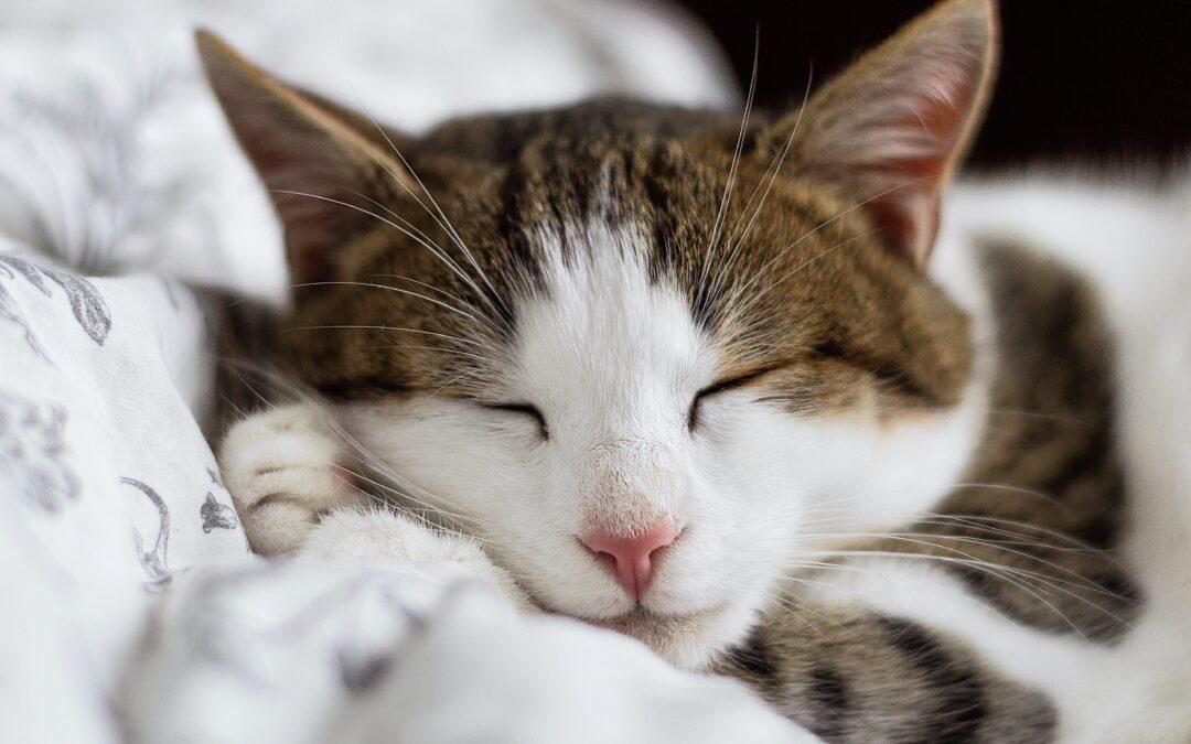 Mačka – odlična terapevtka